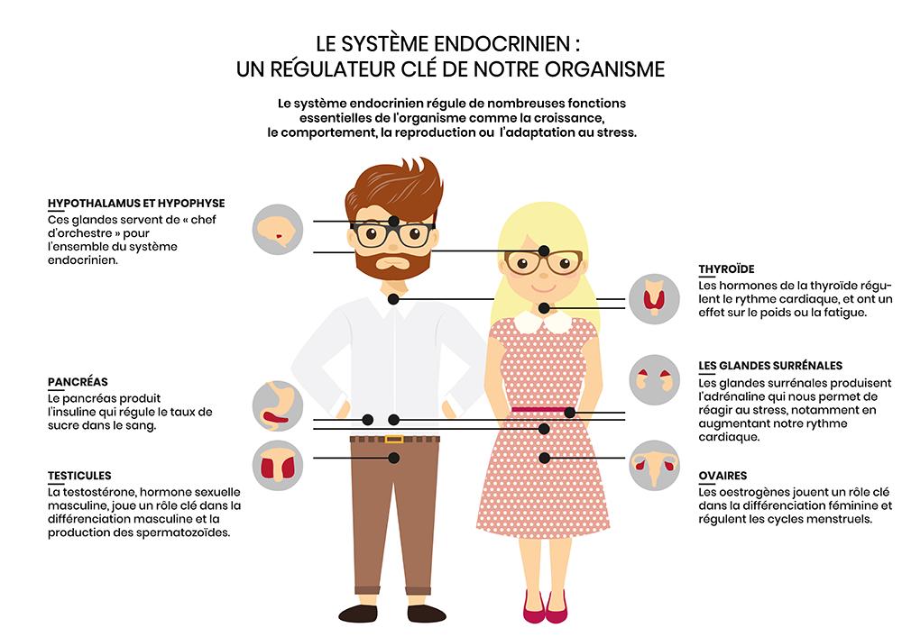schéma explicatif présentant les organes ciblés par les perturbateurs endocriniens