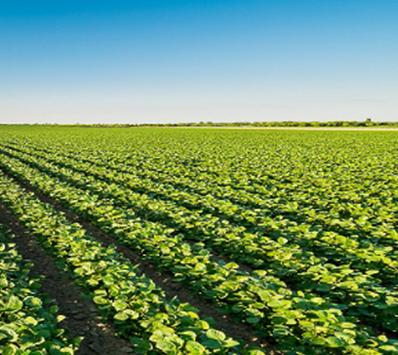 Produits phytosanitaires : Accord des experts des états membres (SCOPAFF) sur les critères d'identification des PE